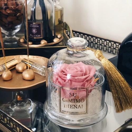 Mieganti rožė stiklo inde po gaubtu (pelenų rausva)