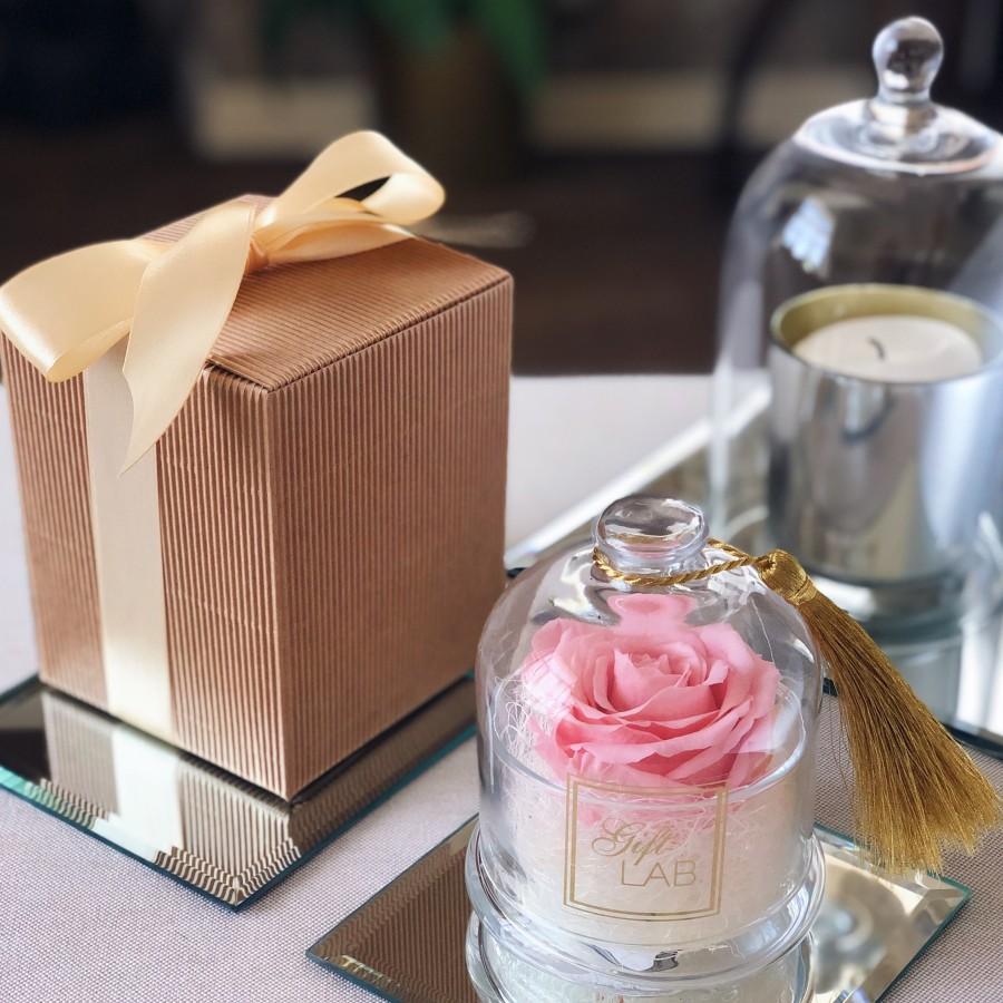 Mieganti rožė stiklo inde po gaubtu (vintage rausva)